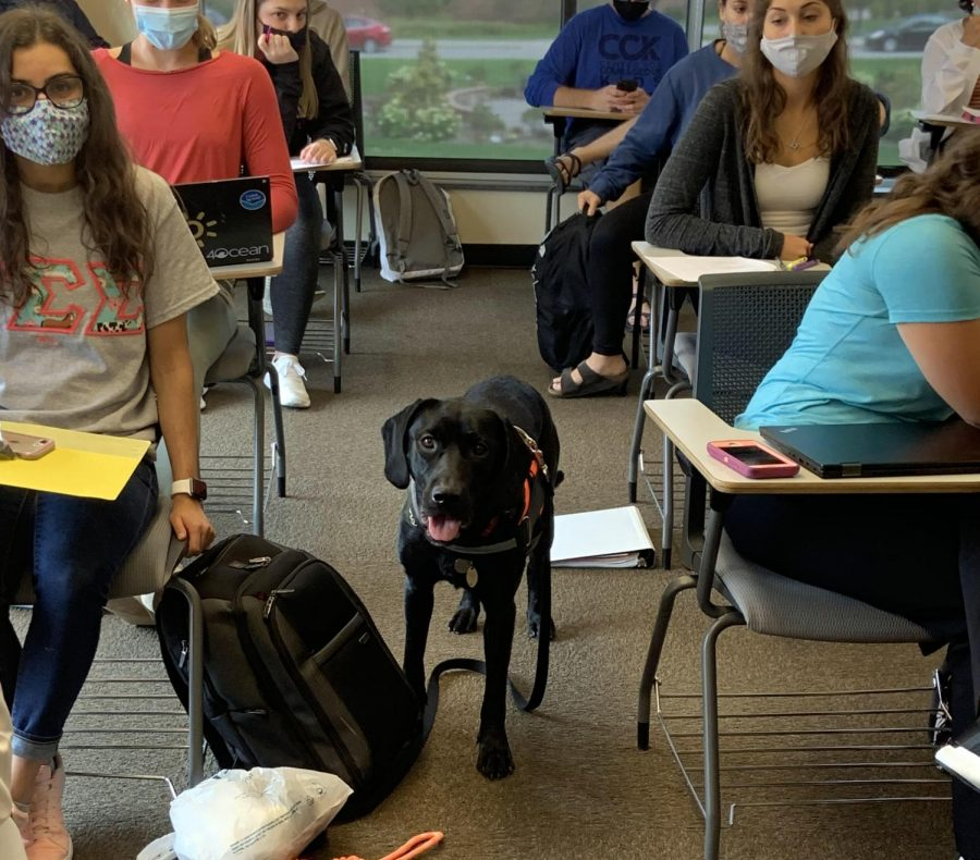 Dogs in Classrooms May Promote Healthy Habits in Students